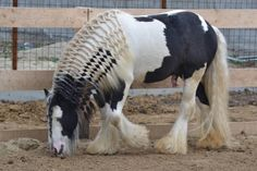 People who have the patience to do this with a horse's mane amaze me!