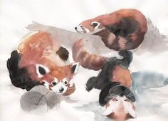watercolor red pandas by Stephan http://my-journey-into-art.blogspot.com/