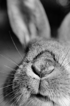 Trendy Ideas For Nature Girl Photography Heart Animals And Pets, Baby Animals, Cute Animals, Spring Animals, Wild Bunny, Netherland Dwarf, Girl Sleeping, Pet Rabbit, Tier Fotos
