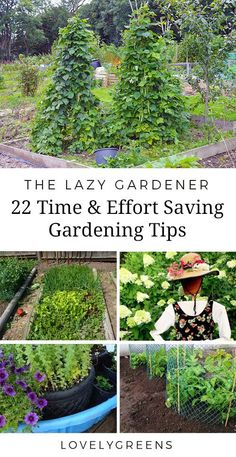 22 Tips to save time, effort, and money in the garden.