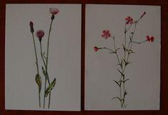 Set van 10 vintage ansichtkaarten met botanische tekeningen van bloemen uit een serie van het IVN (Instituut voor natuurbeschermingseducatie.