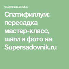 Спатифиллум: пересадка мастер-класс, шаги и фото на Supersadovnik.ru