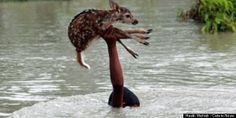 A wildlife photographer visiting Noakhali, Bangladesh, was able to witness -- and document -- an amazingly courageous teen risk his own life to save a drowning fawn.