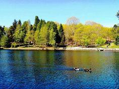 Lago castiñeiras.  Pontevedra