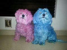 My fur babies
