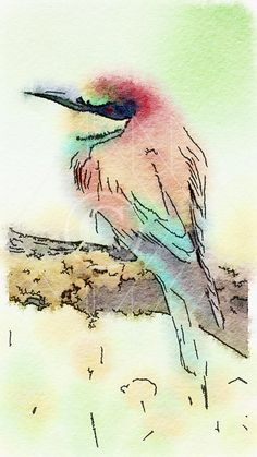 European Bee-Eater - Printable Art, Instant Downloadable Images, Fine Art. by edeblas on Etsy