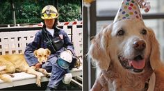 9/11 dog honored: Bretagne, the last known surviving dog that helped with search-and-rescue efforts following the Sept. 11 attacks, just turned 16, and was treated to a hero's birthday bash!