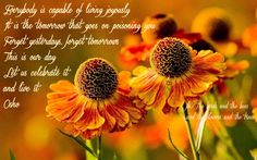 Everybody is capable of living joyously. It is the tomorrow that goes on poisoning you. Forget yesterdays, forget tomorrows. This is our day! Let us celebrate it and live it. ~ Osho -    Rudbeckia