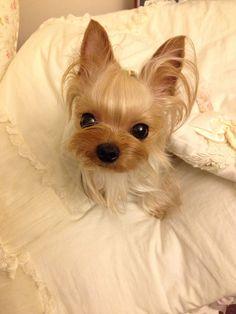 Puppuru just woke up~ adorable !!!