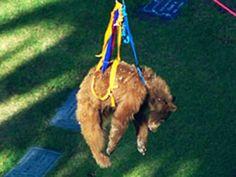 Urso foi resgatado de cima da árvore depois de três tranquilizantes.