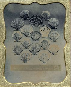 Bivalve Shells: Study 1 - Daguerreotype
