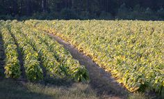 Gone Days, Farm Images, One Summer, Family Love, Farm Life, Farmers, Barns, Wisconsin, Kentucky