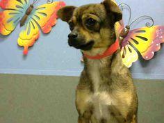 www.PetHarbor.com pet:MRVL.A446512