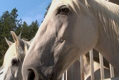 """""""Horses at Liberty"""" performance benefits people with disabilities on the Palouse"""