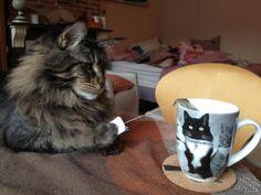 盗まれてるのに憎めない。泥棒猫たちのおとぼけ犯行現場25連発 : カラパイア