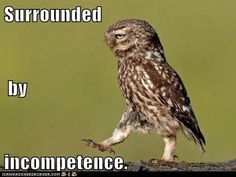 Funny Animal Captions - Bad Pick-Up Line Owl is Interested in You Bad Pick Up Lines, Pick Up Lines Cheesy, Pick Up Lines Funny, Animal Captions, Funny Animal Memes, Funny Animals, Animal Humor, Owl Humor, Funny Pick
