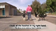 Train multiple dogs to walk next to you at once - No training collars required