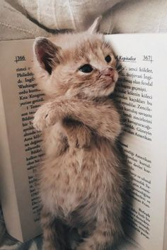 My Favourite Bookmark . - My Favourite Bookmark …. My Favourite Bookmark …. My Favourite Bookmark …. Cute Baby Cats, Cute Little Animals, Cute Funny Animals, Cute Dogs, Funny Cats, Kittens And Puppies, Cute Cats And Kittens, I Love Cats, Kittens Cutest