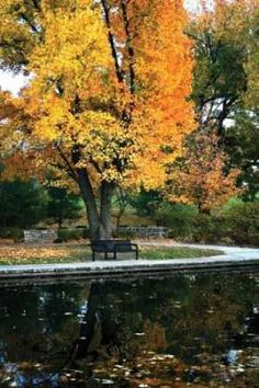 Fall in the Park