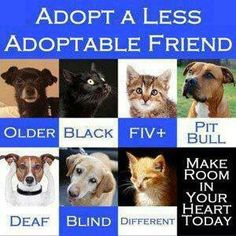 I would add feral cats to the list. Have a pit bull, on my fifth black cat and a semi-feral kitten rescue. Rescue Dogs, Animal Rescue, Animal Adoption, Pet Adoption, Kitten Rescue, Shelter Dogs, Gato Animal, Stop Animal Cruelty, Pet Care