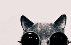 Iphone+Wallpaper+Tumblr+Cat+Cool
