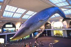 Museo de Historia Natural - Unos de los museos más grandes del mundo   Nueva York #newyork #travel #viajar #turismo #sights www.vivenuevayork.es