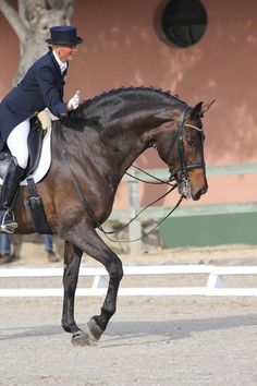 Love this horse! He has the fatty deposit on his crest I've often seen in Morgans. Anyone know his breed?
