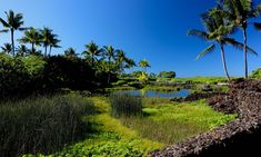 COMMON HAWAIIAN WORDS AND PHRASES