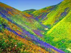 22 Technicolor Dreamscapes You Won't Believe Are Real, Actual Places In Nature (Nanda Devi Peak and Valley Of Flowers National Park pictured)