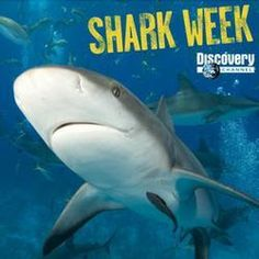 """Shark Week on Discovery Channel-Loving this!! As much as the movie """"Jaws"""" scared the bejezzus out of me when I was little, I really love watching the shows on Shark Week.  The are truly fascinating!"""