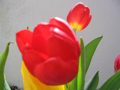 stelian ilie flower 6 Plants, Flora, Plant, Planting