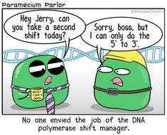 biology jokes Its like they ALL want to work from 5 to DNA Replication - DNA Polymerase Science Comics, Science Puns, Science Biology, Science Videos, Teaching Biology, Life Science, Forensic Science, Computer Science, Science Daily
