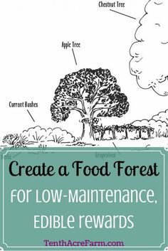 Create a Food Forest for Low-Maintenance, Edible Rewards: A food forest, or edible forest garden, is a food production strategy that mimics a woodland ecosystem. Find out how to create a low-maintenance, perennial, permaculture garden with edible rewards!