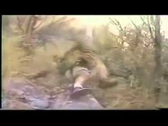 Leopard Hunter Does the Dumbest Thing Possible [VIDEO] | Sportsoutdoor