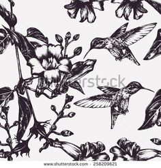 Vector Seamless Pattern With Hummingbird And Tropical Flowers Stock Vectors & Vector Clip Art | Shutterstock