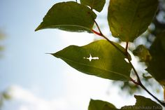 Leaves | Flickr - Photo Sharing!