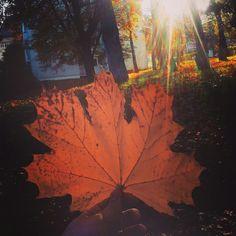 #favseason #novemberfalls #autumnlove #leaves #mykindoflove 🍁🍁🍁