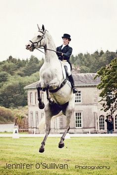 Classic Dressage Move....very, very advanced.  For 5th level only....
