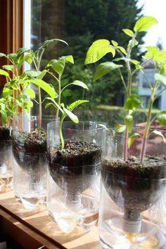 Alternative Gardning: Self-Watering Seed Starter Pots