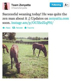 Zenyatta's son is now a weanling, meaning he's now hanging out without his famous Mom. Good luck, little guy!