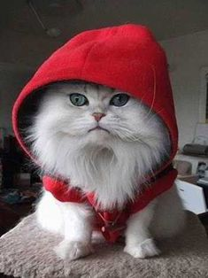 Red Riding Cat