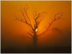 http://www.43pixels.com/wp-content/uploads/2010/12/dead-tree-photography-43pixels.jpg