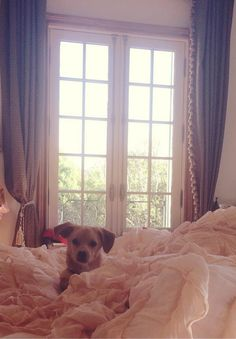 """ari] """"good morning from toulouse and i! its my birthday! having a party!"""" i giggle"""
