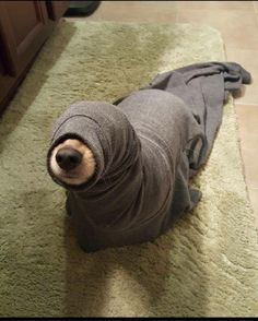 stories from the city - dog as seal