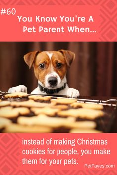 You Know You're A Pet Parent When... instead of making Christmas cookies for people, you make them for your pet.