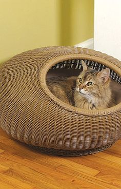 Decorative Cat Pod.