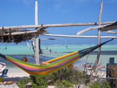 Bonaire. Jibe City.  We had a hammck like this on our back porch, too.  We often saw dolphins/pourpose.