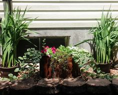 Filled a old copper pot with perennials and annuals
