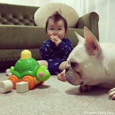 こんにちは、カメ吉♥️ #frenchbulldog #frenchie #dog #daughter #babygirl #フレンチブルドッグ #女の子
