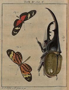 Helicoma spp + rhinoceros beetle V4 from 'Insecten-Belustigung' (Insect Amusements) by AJ Rösel von Rosenhof, 1700s.